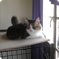 Adopt A Pet :: Biscuit - Scottsdale, AZ