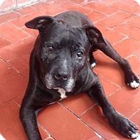 Adopt A Pet :: CAPTAIN - Corona, CA