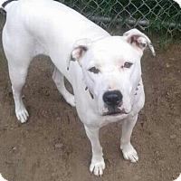 Adopt A Pet :: Jody - Treton, ON