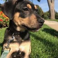 Adopt A Pet :: Ike - Brandon, SD
