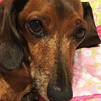 Adopt A Pet :: Pepe #2 in SC - Columbia, TN