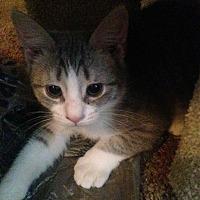 Adopt A Pet :: PEANUT - Clayton, NJ