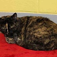 Adopt A Pet :: PEG - Hampton Bays, NY