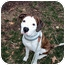 Photo 1 - American Bulldog Dog for adoption in Indianapolis, Indiana - Louie