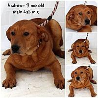Adopt A Pet :: Andrew - Evansville, IN