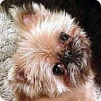 Adopt A Pet :: OLIVER - ADOPTION PENDING! - Los Angeles, CA