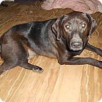 Adopt A Pet :: Baxter - North Jackson, OH