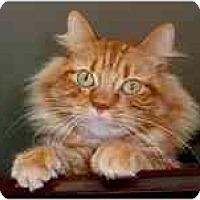 Adopt A Pet :: Finnegan - Arlington, VA