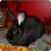 Adopt A Pet :: Danny - Roseville, CA