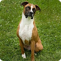 Adopt A Pet :: Sadie - Brentwood, TN