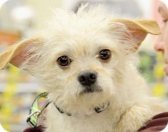 Terrier (Unknown Type, Small) Mix Dog for adoption in Rockford, Illinois - Oliver