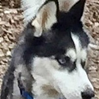 Adopt A Pet :: Wesley - Memphis, TN
