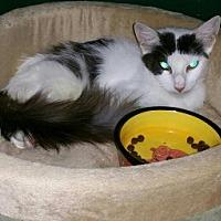 Adopt A Pet :: House - Spring, TX