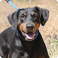 Adopt A Pet :: Gina - Fillmore, CA