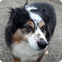 Adopt A Pet :: Ronan - Salem, OR