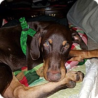 Adopt A Pet :: Ruger - Hagerstown, MD