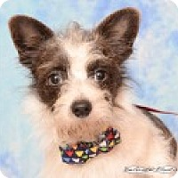Adopt A Pet :: Miles - Pittsboro, NC
