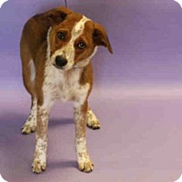 Adopt A Pet :: R2 - Salt Lake City, UT