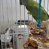 Adopt A Pet :: Rex - Villa Park, IL