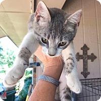 Adopt A Pet :: Meeko - Smithtown, NY