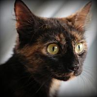 Adopt A Pet :: Fantasia - Staunton, VA
