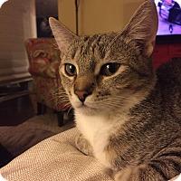 Adopt A Pet :: Edgar - Marietta, GA
