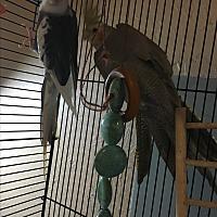 Adopt A Pet :: Baja & Athena - Punta Gorda, FL