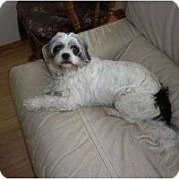 Adopt A Pet :: Lincoln - Rigaud, QC