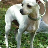 Adopt A Pet :: Prissy - Plainfield, CT