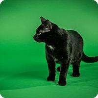 Adopt A Pet :: Harper - St. Louis, MO