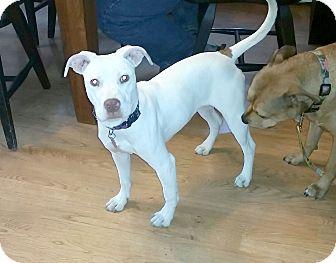 Terrier (Unknown Type, Medium) Mix Dog for adoption in Livonia, Michigan - Winter