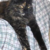 Adopt A Pet :: Topaz - Prescott, AZ