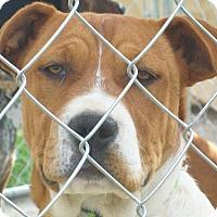 Adopt A Pet :: Adelia - Mexia, TX