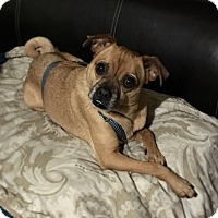 Adopt A Pet :: Mr. Wells - Davie, FL