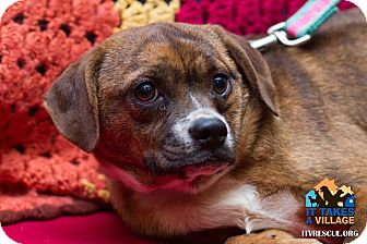Terrier (Unknown Type, Small) Mix Dog for adoption in Evansville, Indiana - Sadie
