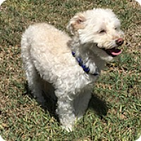 Adopt A Pet :: GRIFFIN - Melbourne, FL