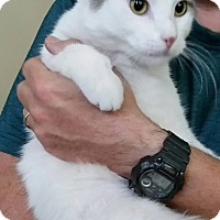 Adopt A Pet :: #CAT5 - St. Louis, MO