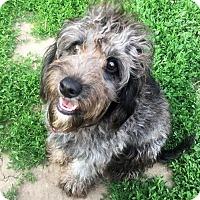 Adopt A Pet :: Dale - Buffalo, NY
