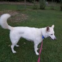 Adopt A Pet :: Lily Rose - Richmond, VA
