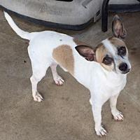 Adopt A Pet :: ChuChu - Austin, TX