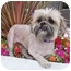 Photo 3 - Lhasa Apso Mix Dog for adoption in Los Angeles, California - SAGE