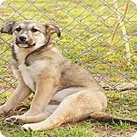 Adopt A Pet :: Dizzy - Ranger, TX