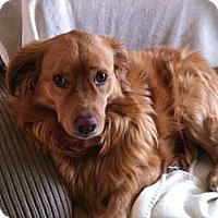 Adopt A Pet :: Cheyenne - Denver, CO