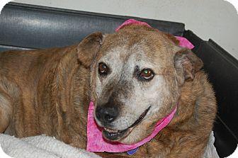Boxer Mix Dog for adoption in Hot Springs, Arkansas - Honey Girl