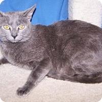 Adopt A Pet :: Skywalker - Colorado Springs, CO