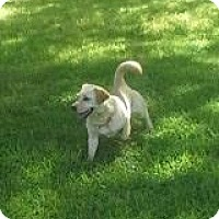 Adopt A Pet :: Peggy Sue - Rayville, LA