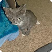 Adopt A Pet :: Hope - Edmonton, AB