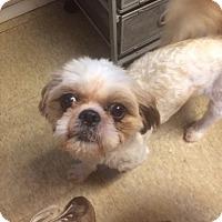 Adopt A Pet :: Ophelia - Fair Oaks Ranch, TX