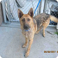 Adopt A Pet :: Skye - Tracy, CA