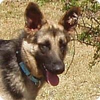 Adopt A Pet :: Sage - Dripping Springs, TX